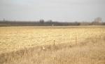 Iowa Gold