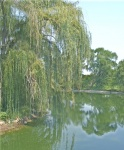 Weeping Pond